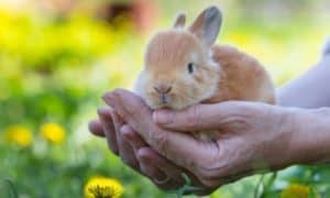 Are Rabbits Hard to Care For? A Practical Guide