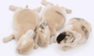 Do Rabbits Miss their Babies?Rabbit Love!