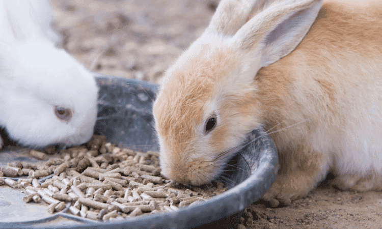Feeding A Baby Rabbit: When, What & How Much