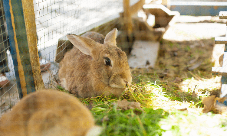 What To Do If Rabbit Eats Poisonous Plant?
