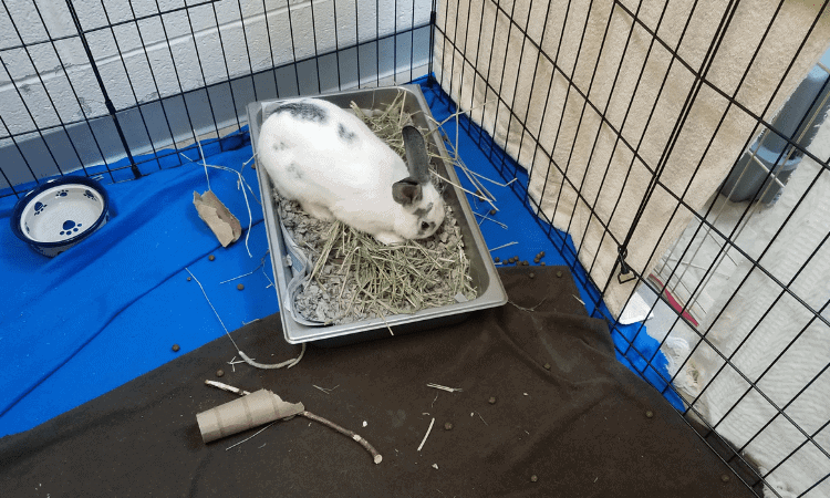 10 Easy Steps to Set Up A Rabbit Litter Box (The Correct Way!)