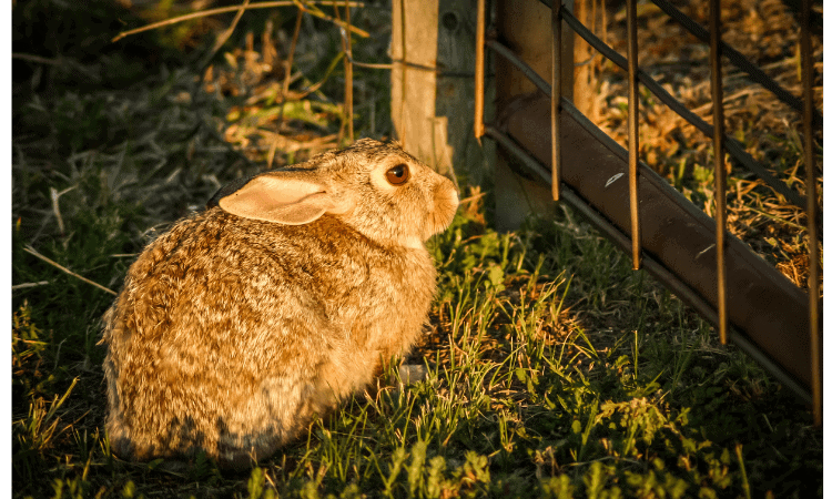 12 Effective Methods To Rabbit-Proof A Gate