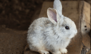 Are Puppy Pads Safe For Rabbits?