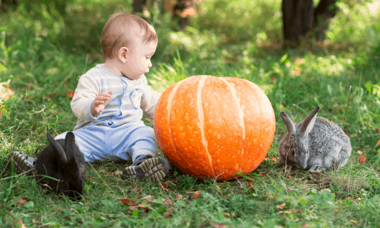 Are Rabbits Good Pets for Kids? The Good & The Bad