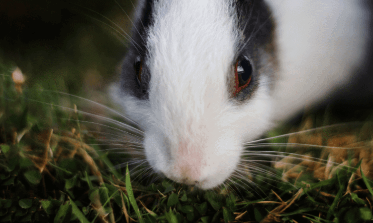 Are Rabbit Noses Supposed to Be Wet?