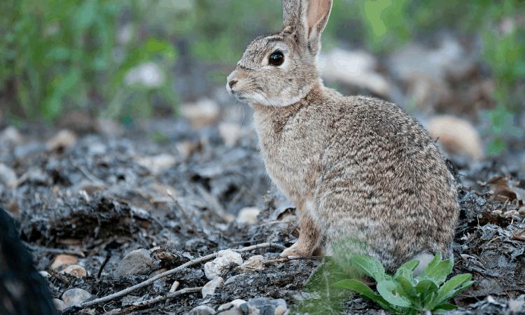 Bunny Proofing Wires: 12 Easy Methods