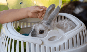 Can 2 Rabbits Share 1 Carrier?