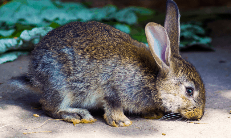 Can A Rabbit Live In A Garage? (Hint: It Depends)
