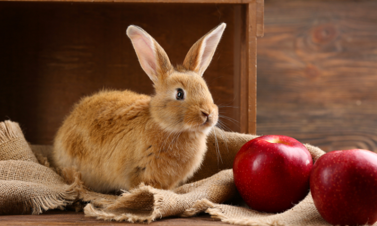 Can Rabbits Eat Food Coloring?