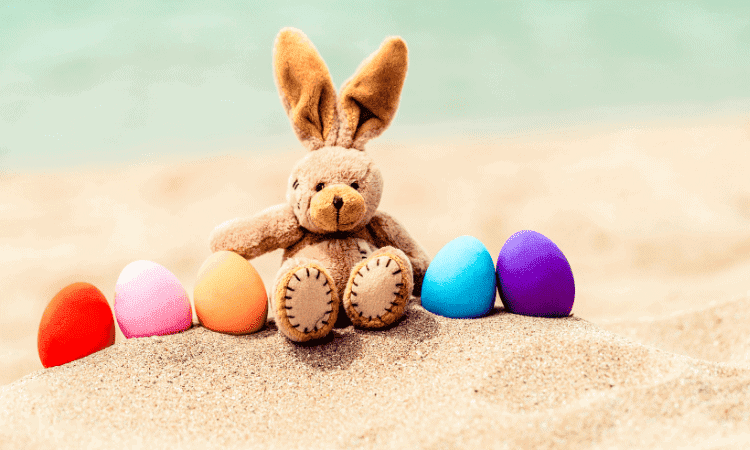 Can You Take Your Rabbit To The Beach?