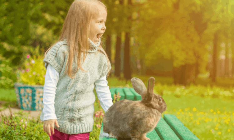 Can You Take Your Rabbit To The Park?