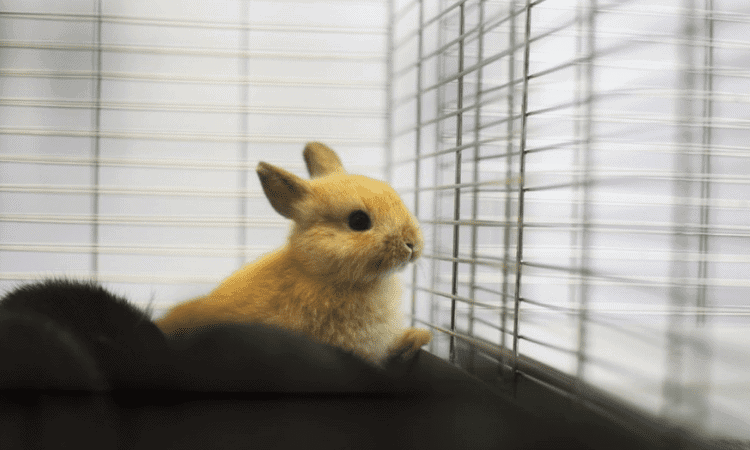Can a Rabbit Stay in an Air-Conditioned Room?