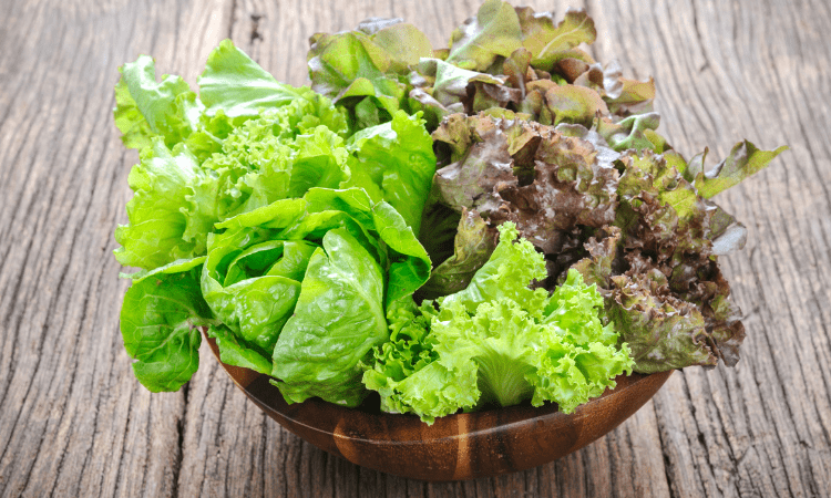 Can A Rabbit Eat Too Much Lettuce? Here's the Answer