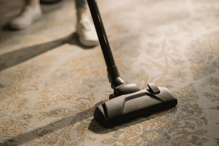 Can you Vacuum Rabbit Poop? What You Must Know