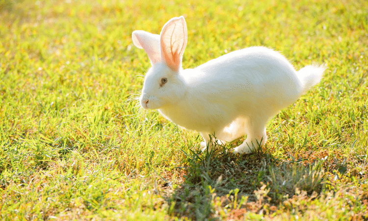 Concrete Vs Grass: Which Is the Best for Rabbit Runs?