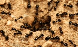 Do Ants Harm Rabbits? Here's the Answer