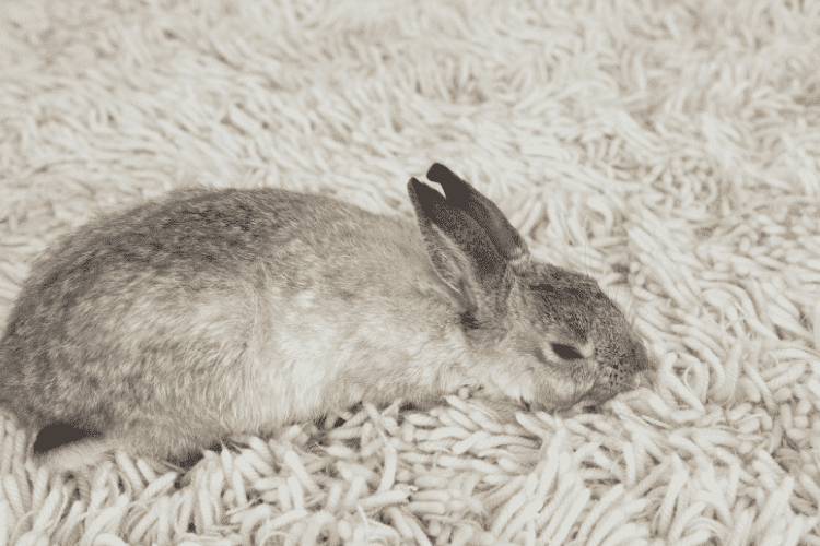 Do Baby Rabbits Sleep More? Here's the Answer