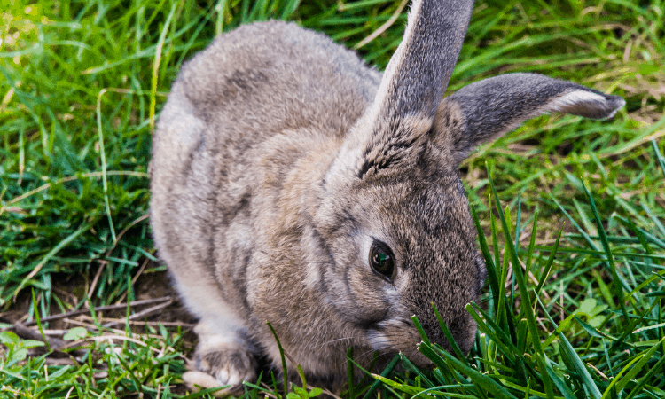 Do Male Rabbits Have Teats? Here's the Answer