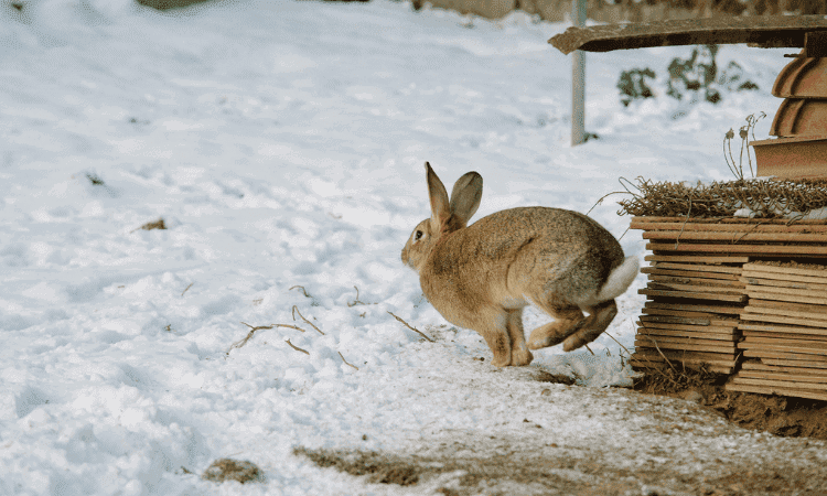 Do Pet Rabbits Come Back If They Escape? Here's the Answer!