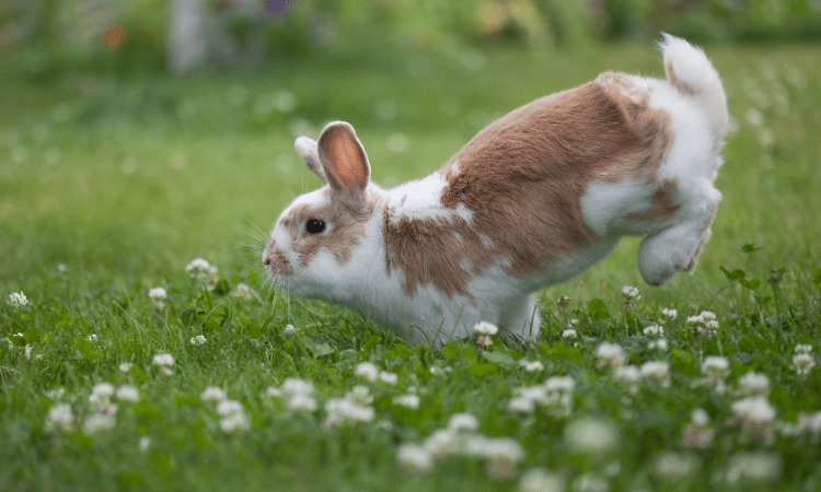 How To Care For A Rabbit In Hot Weather?
