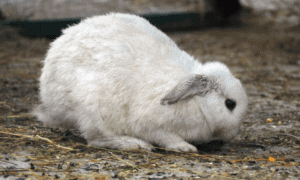 How To Get A Rabbit To Gain Weight? (10 Easy Methods)