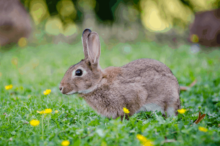 How to Keep a Rabbit Outside?Here's How