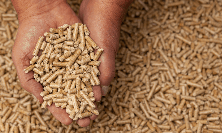How to Store Rabbit Pellets? Here's How