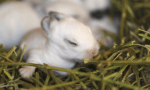 Is Your Rabbit Blind? Find Out in 8 Simple Methods