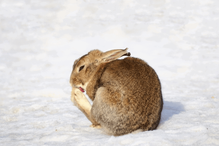 Is Your Rabbit Too Fat?Here's the Answer!