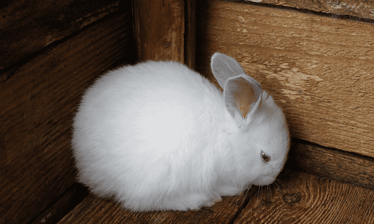 5 Reasons Your Rabbit Stays In One Corner