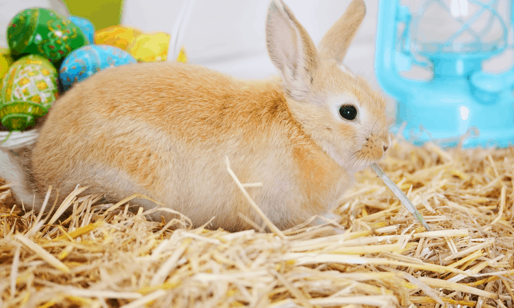 Should Rabbits Have Unlimited Hay? Explained!