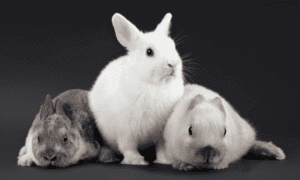 What To Do If Your Rabbit Isn't Feeding Her Babies?