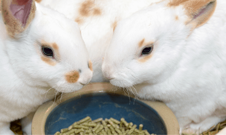 Why Rabbits Don't Need Pellets