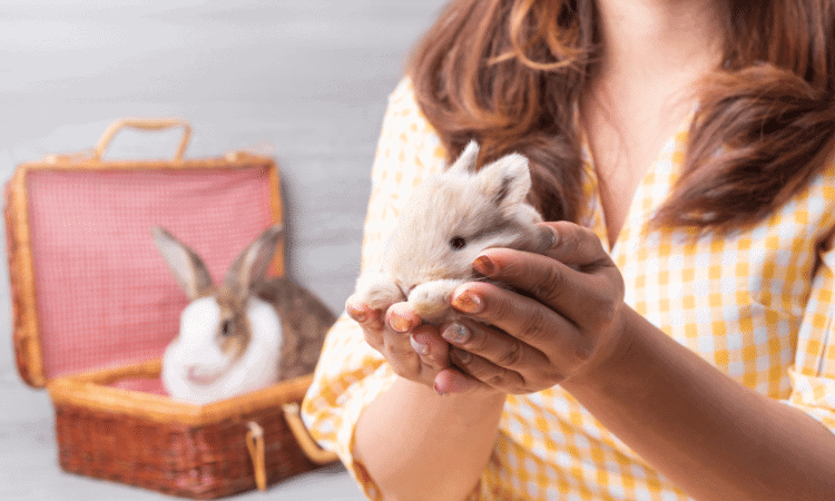 Can You Carry Your Rabbit Like A Baby?