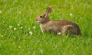 Can A Wild Rabbit Survive A Broken Leg?