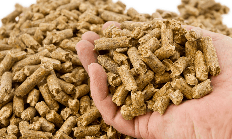 Do Rabbit Pellets Expire? Here's What You Need to Know
