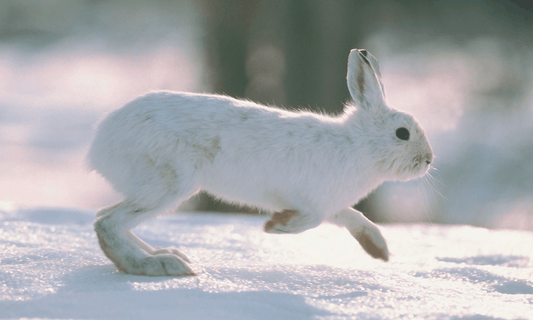 Do Rabbits Like Being Chased? – A Safety Guide