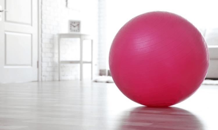 Do Rabbits Like Exercise Balls and Wheels?