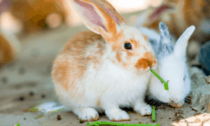Do Rabbits Miss Each Other? (How Can You Help)