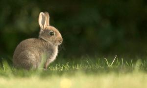 How Good Is a Rabbit's Eyesight? Myths Vs Truths