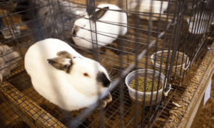 Multi-Level Cages for Rabbits: Is it a Good Idea?