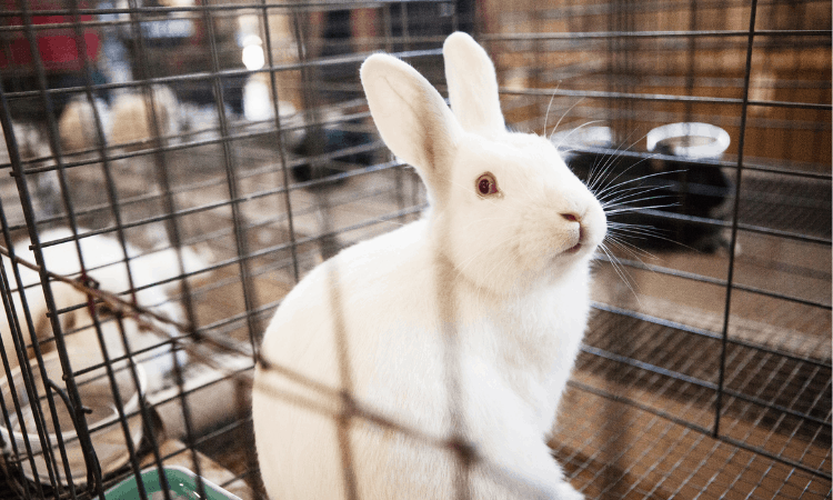 Why Your Rabbit Bites His Cage? (And Fixes)