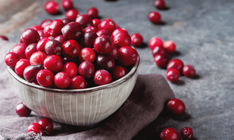 Can Rabbits Eat Cranberries? Here's the Answer