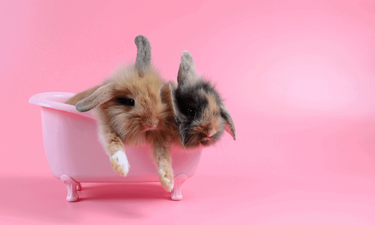 Shampoo For Rabbits: What You Can And Cannot Use?