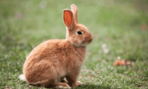 So Your Rabbit Ate Plastic – What Should You Do?