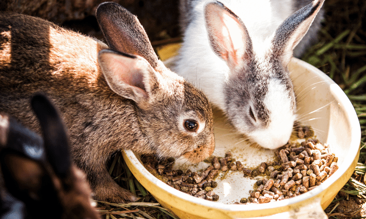 The Best Foods For Rabbits With Diarrhea