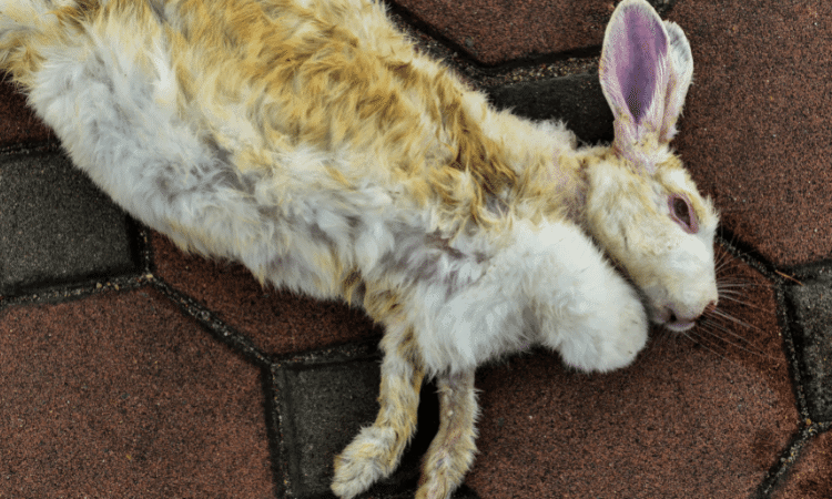 Why Do Your Rabbit Lays On Its Side? Here's the Reason