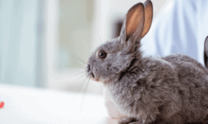 Will A Rabbit's Personality Change After Neutering?