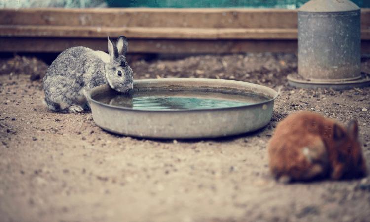 How Often Should You Change Rabbit's Water?