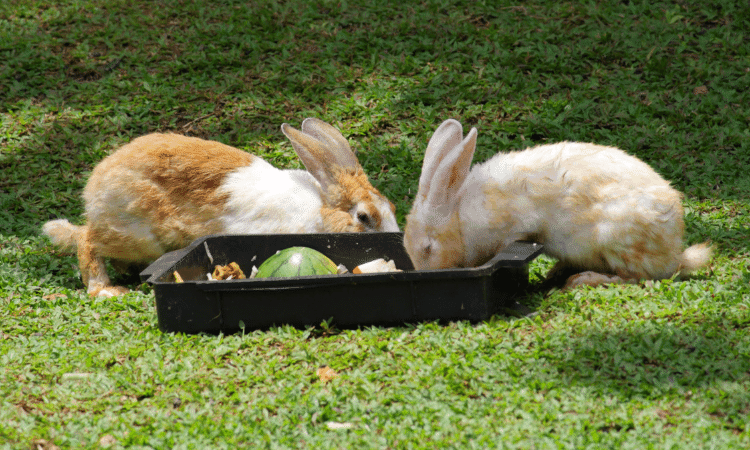 Rabbit Only Comes For Food? 6 Easy Ways To Bond